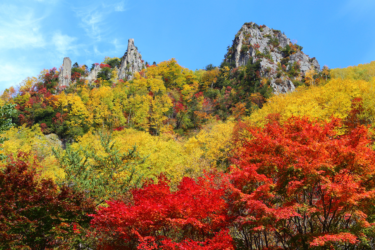 autumn-leaves-spot-5-election-about-hokkaido-and-tohoku